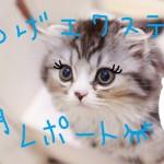 マツエク1ヵ月レポート!渋谷駅から徒歩3分のアイラッシュサロン セリナがオススメ(っ´ω`c)指名も出来てモチもバッチリ!