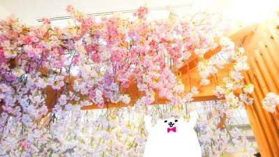 starbucks_ueno_sakura_special_version_2005[3]