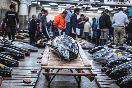 tsukiji-wonderland-3