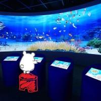 鴨川シーワールド3/1リニューアルOPEN!夕焼けバックのショーと巨大デジタル水槽が凄そう!