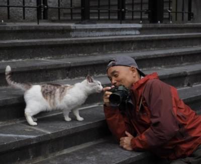 mr-iwago_world_cats[1]