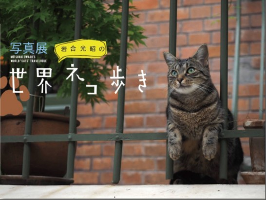 mr-iwago_world_cats[2]