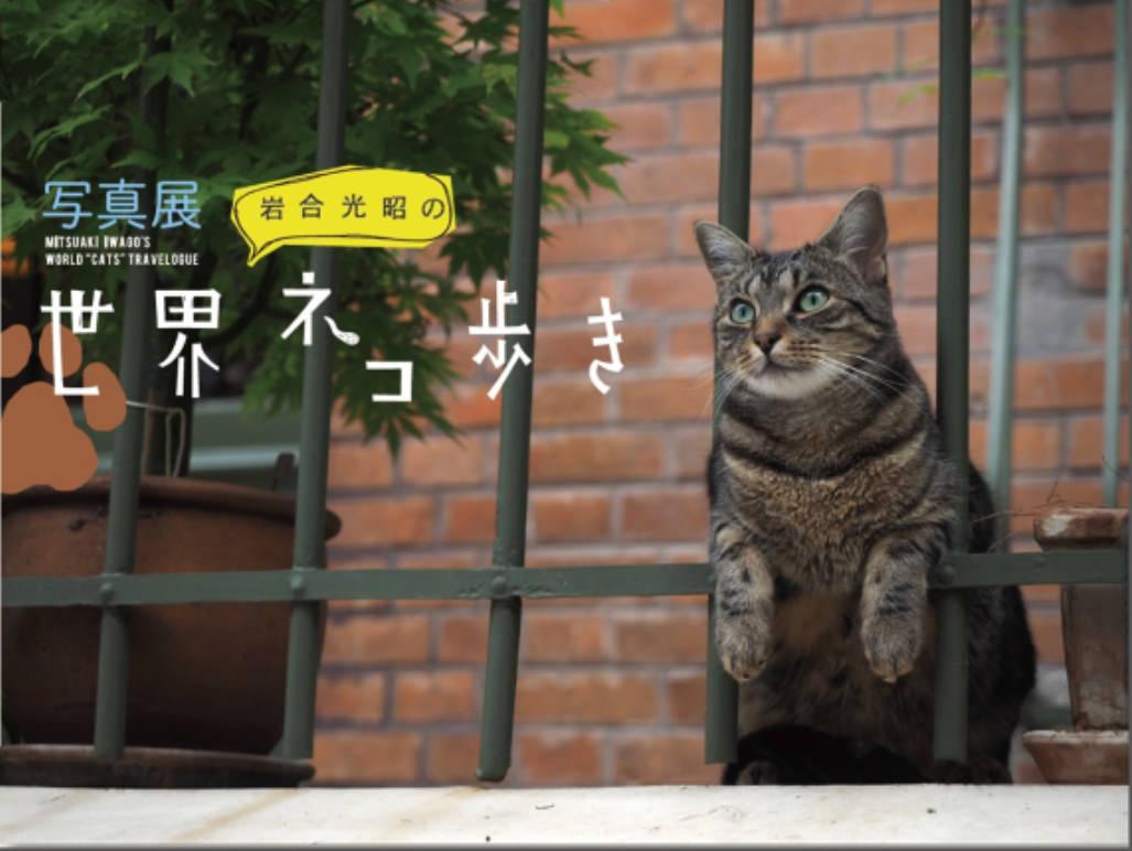 NHK BSプレミアムの人気番組「岩合光昭の世界ネコ歩き」が写真展に!まずは東京と大阪で開催決定&写真集も発売!