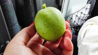生のクルミの果実