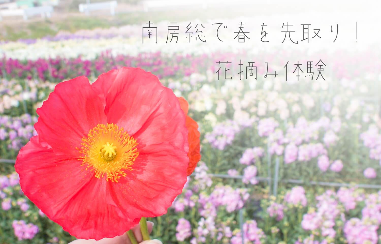 【千葉】春先取り!南房総でお花を摘むのだ!10本500円で大量の花摘み体験行ってきました。