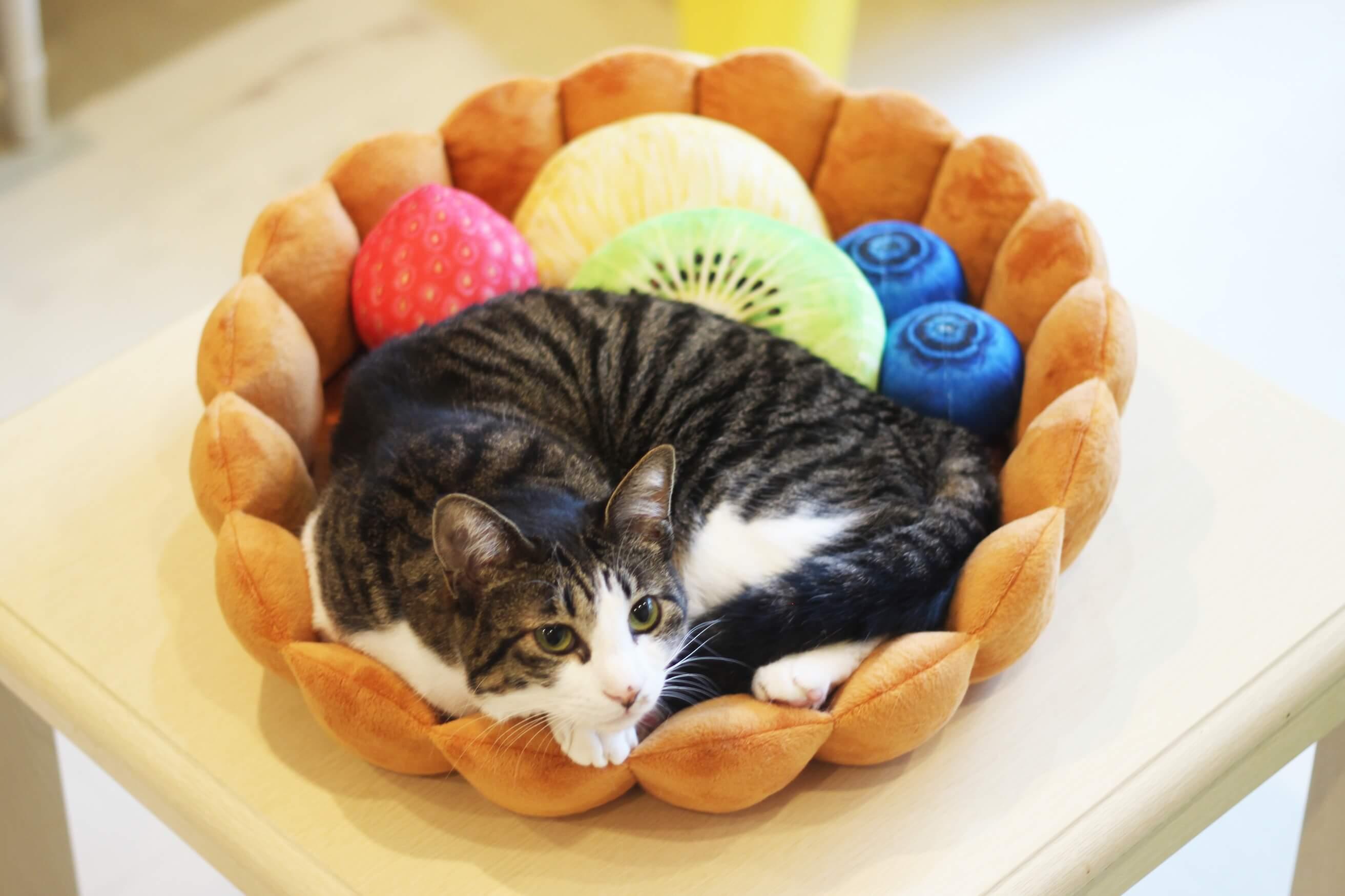 フェリシモ猫部は天才か!小さめの猫や犬がフルーツタルトになっちゃう!「スイーツにゃんこクッション」かわいい~!